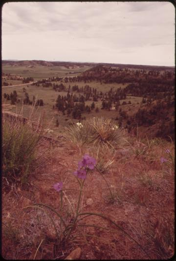 montana ranch portrait